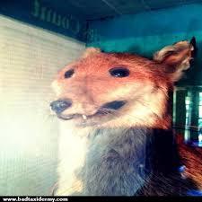 Taxidermy Fox Meme - bad taxidermy home