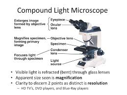 a light microscope image is formed by discovering the cell chapter 4 discovering the cell robert hooke