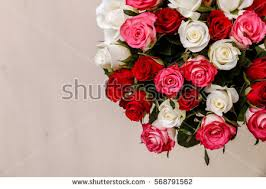 bouquet of roses roses bouquet stock images royalty free images vectors