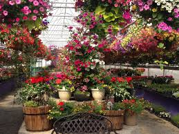 native utah plants garden gateway garden center logan utah greenhouse logan utah plants