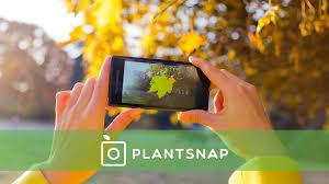 plantsnap identify plants with an app by greenatom earth