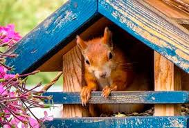 How To Hunt Squirrels In Your Backyard by How To Get Rid Of Squirrels Top 6 Repellents And Traps