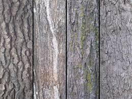 4 tree textures texture sharecg