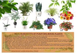 benefits of houseplants the health benefits of 10 purifying house plants indoor air is