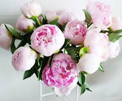 where to buy peonies 5 tips for peonies