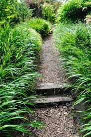 hakonechloa macra 7 essential ornamental grasses thinking
