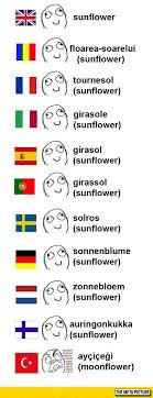Different Languages Meme - sunflower in different languages