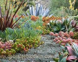 succulent garden designs solidaria garden