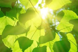 artificial tree lights problem artificial photosynthesis could solve co2 emission problem