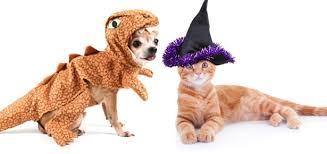 pet costumes pet costumes modern dog magazine