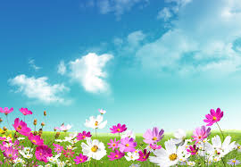 50 free spring background hd quality spring images spring