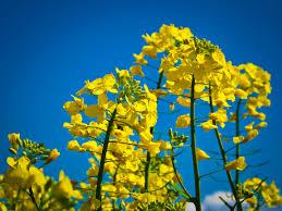 flora sky apk free free images landscape nature forest branch blossom sky