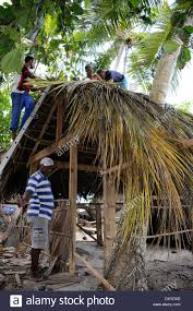 Mexican Thatch Roofing by Coconut Palm Thatch Stock Photos U0026 Coconut Palm Thatch Stock