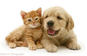 free kitten and puppy wallpapers phone long wallpapers