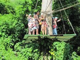 tree platform in the jungle picture of vanuatu jungle zipline