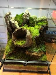529 best pets herps tropical terrariums images on pinterest