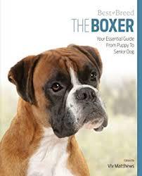 boxer dog 2015 diary boxers for dummies howell dummies series amazon co uk richard
