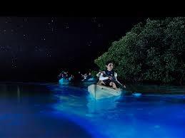 kayak lights for night paddling florida bioluminescence kayaking tours florida s bioluminescent bay