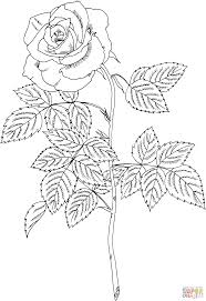 brandy hybrid tea rose coloring page free printable coloring pages