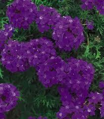 Backyard Ground Cover Options 165 Best Garden Groundcover Walkable Plants Images On Pinterest