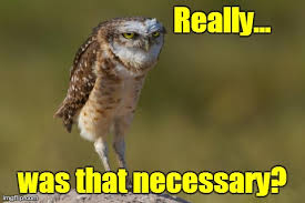 Funny Owl Meme - image tagged in burrowing owl funny owls imgflip