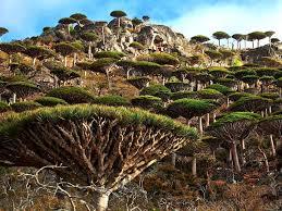 mystical sentinels worlds most beautiful trees