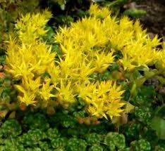 12 low maintenance perennials garden lovin