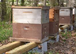 beekeeping hobby grows in mississippi nation mississippi state