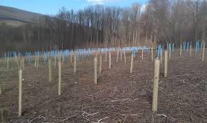 planting trees for wildlife in the fall northeast land management