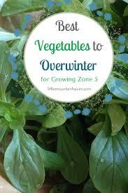 best vegetables to overwinter in growing zone 5 garden