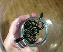 how to take care of garter snakes 3 steps