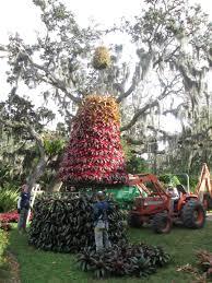 o bromeliad tree o bromeliad tree u2026 u201d marie selby botanical gardens