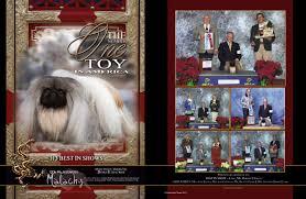 affenpinscher joey best show dog ads photos