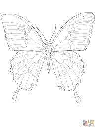 ulysses butterfly coloring page free printable coloring pages