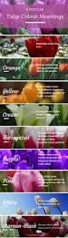 Spring Colors Best 25 Tulip Colors Ideas On Pinterest Seeds Color Schemes