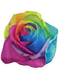 multicolor roses multicolor design throw colorful accessories one