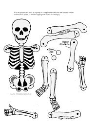 skeletal system without label google search preschool