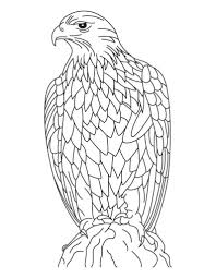 silent golden eagle coloring page download free silent golden