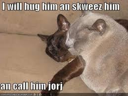 Cat Hug Meme - all the cat images
