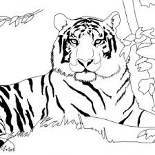 coloring page tiger paw coloring page tiger paw archives similarpages co new coloring