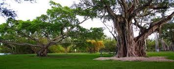 matheson hammock park miami dade county