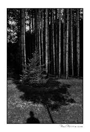 Black And White Photography Black And White Photography Paul Politis Expressive Photography