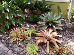 native florida plants for home landscapes central florida gardener