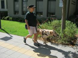 Dogs Helping Blind People Israel Guide Dog Centre For The Blind Visit Bronte The Golden