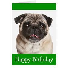 Birthday Pug Meme - pug gifts on zazzle uk