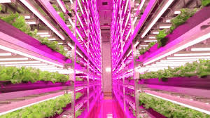 Led Lighting For Vertical Farms Multilayer Production Systems