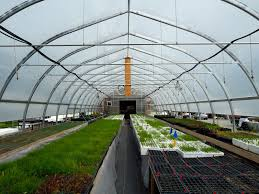 native plant nurseries come visit your local native plant nursery splitrock environmental