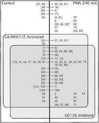 identification of novel map kinase pathway signaling targets by