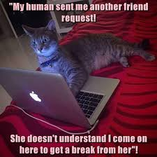 Silly Cat Memes - the problem with teenage cats funny pet humor cute cat meme