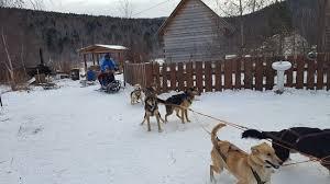 Dog Sledding Picture of Baikal Secrets Irkutsk TripAdvisor